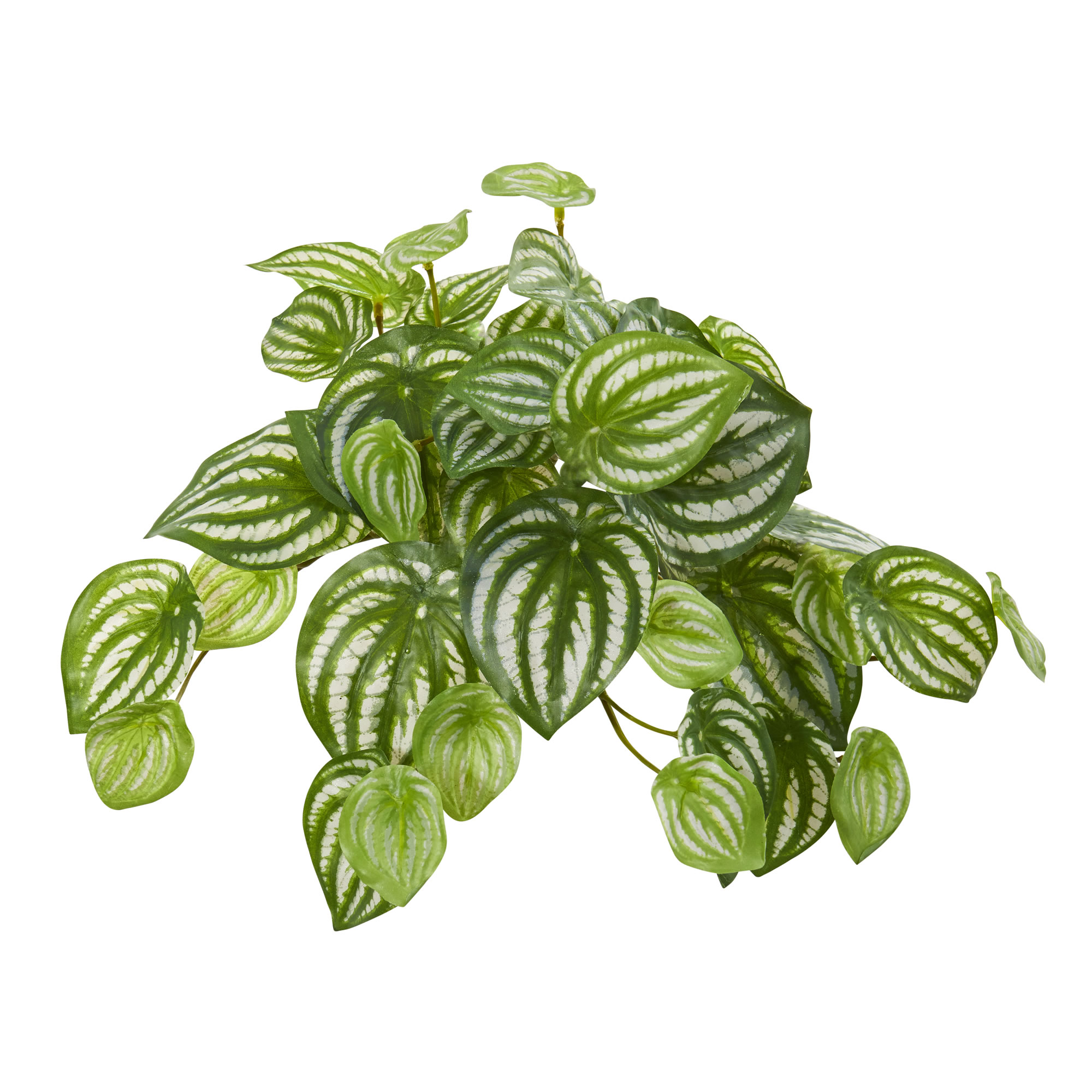 Watermelon Peperomia Hanging Artificial Bush Plant Nearly Natural 11 Set Of 12 192897000802 Ebay